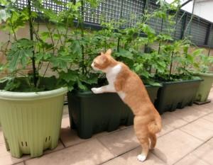 枝豆を育てるならこんなイメージで