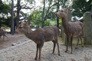 Nara (10)