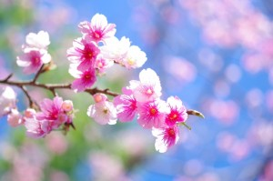 お花見するならレンタルグッズで手軽に!