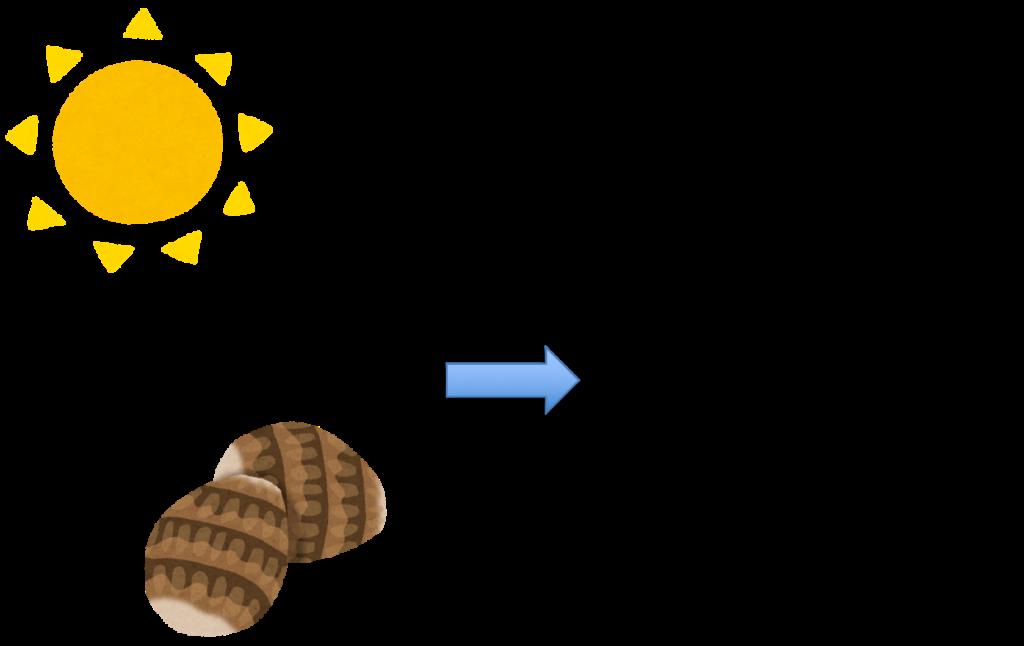 かゆくならない里芋の皮むき方法乾燥編
