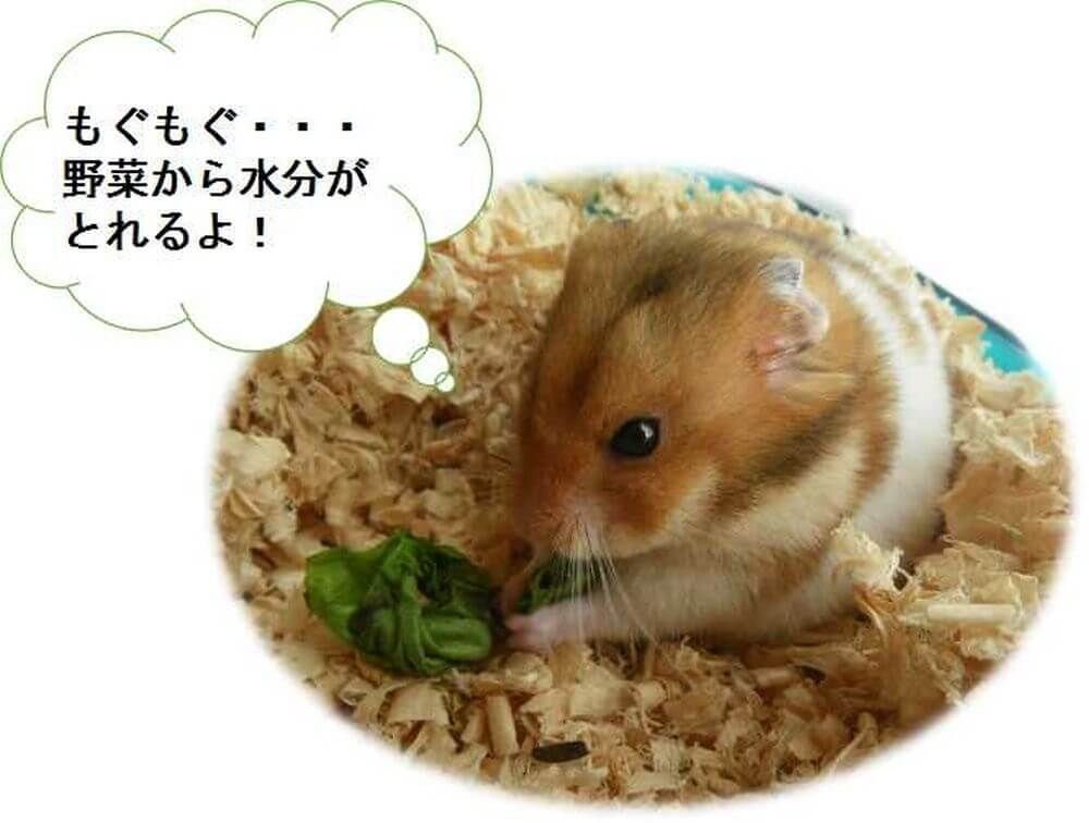 ハムスター 野菜 水