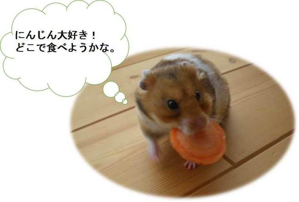 ハムスター 野菜 食べる