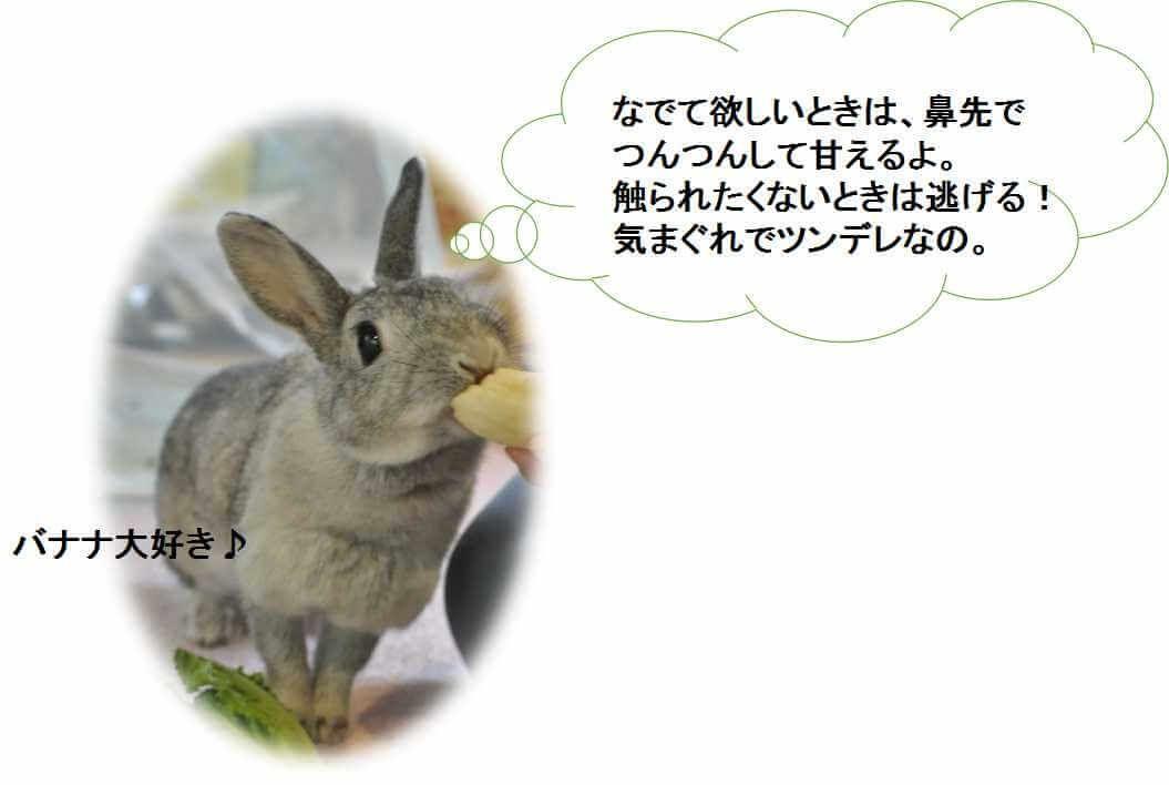 ミニウサギ 寿命 性格