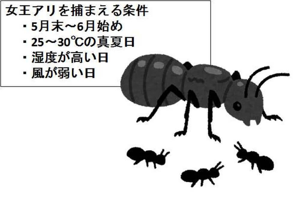 女王アリ 条件 アリの観察キット
