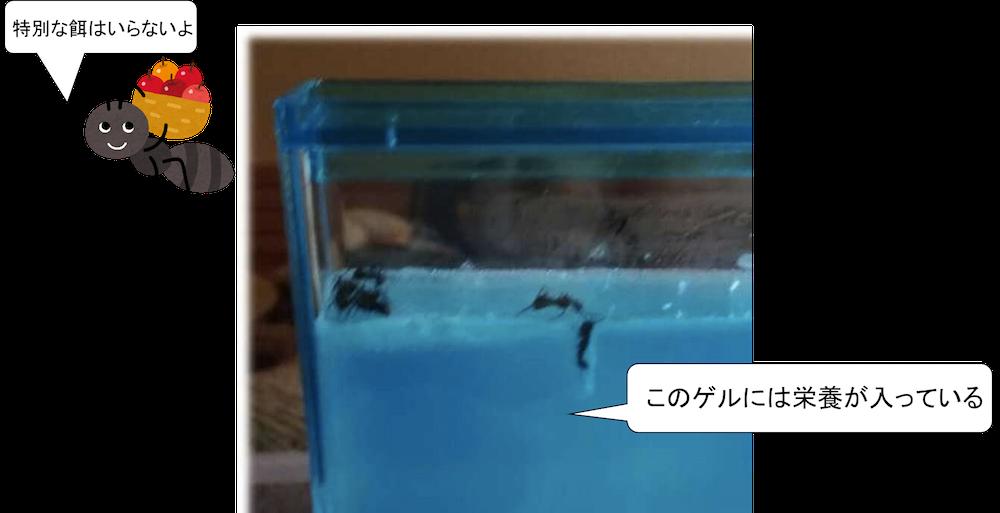 アリの巣キット